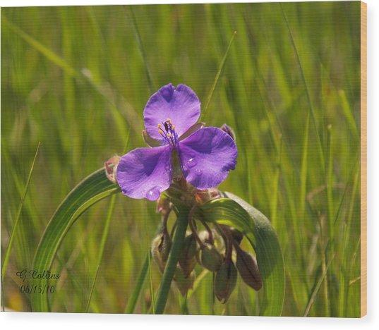 Prairie Wild Flower Wood Print