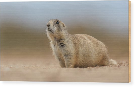 Prarie Dog  Wood Print