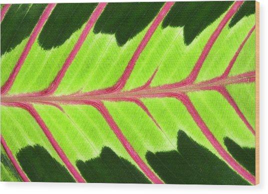 Prayer Plant Leaf Abstract Wood Print by Nigel Downer