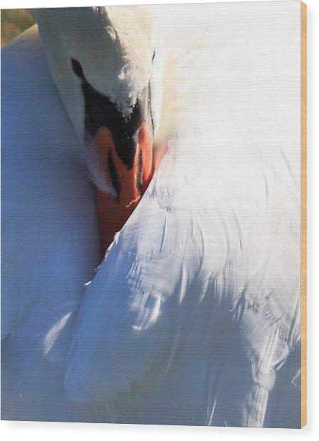 Preening Swan Wood Print