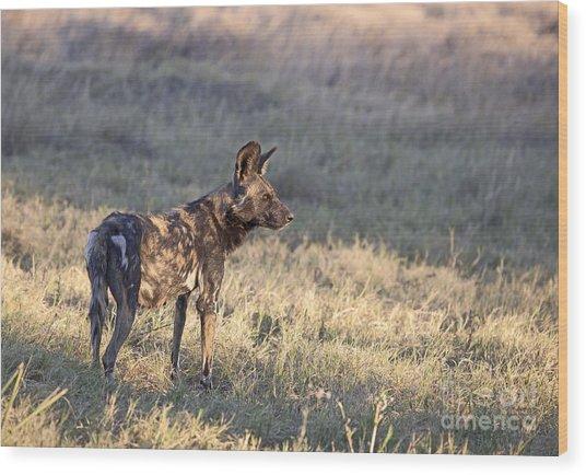 Pregnant African Wild Dog Wood Print