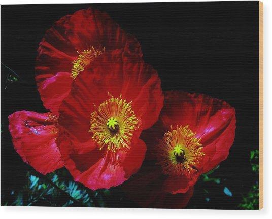 Pretty As A Poppy Wood Print