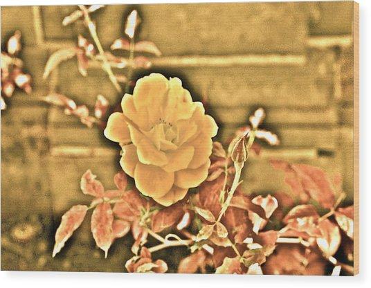 Pretty Flower Wood Print by Joe  Burns