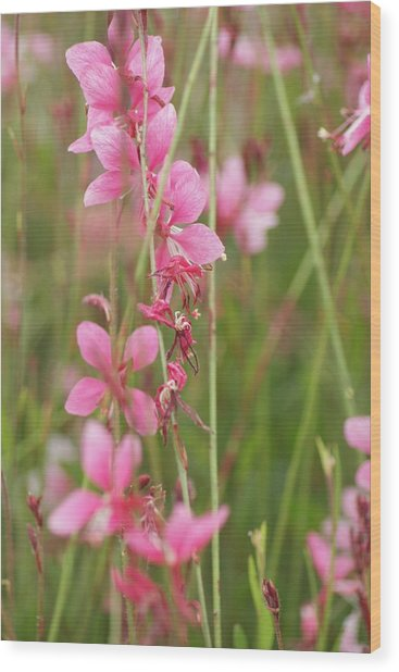 Pretty In Pink Wood Print by Joe Bledsoe