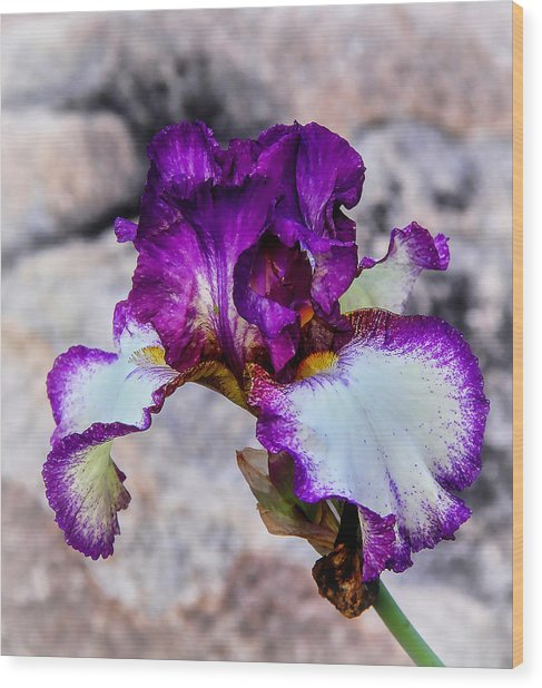 Pretty N Purple Wood Print