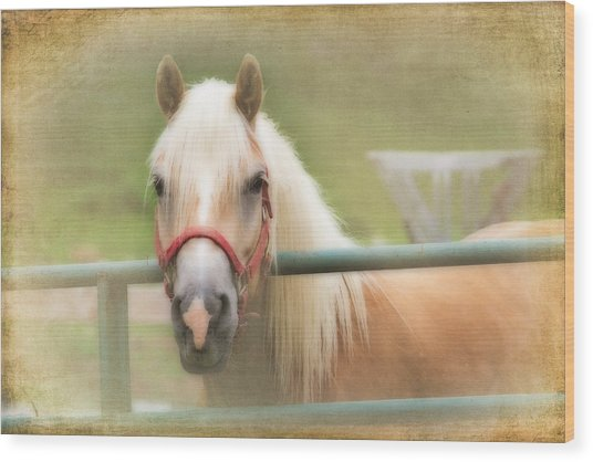 Pretty Palomino Horse Photography Wood Print