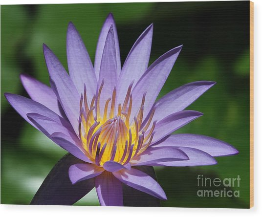 Pretty Purple Petals Wood Print