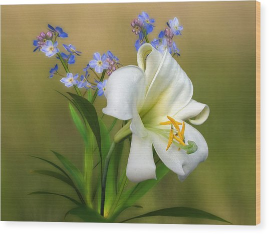 Pretty White Lily Wood Print