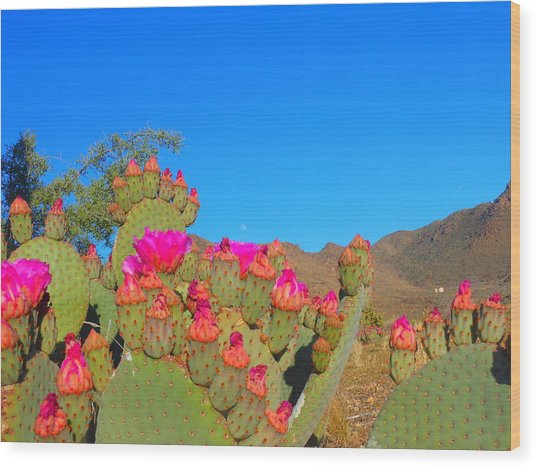 Prickly Pear Blooming Wood Print