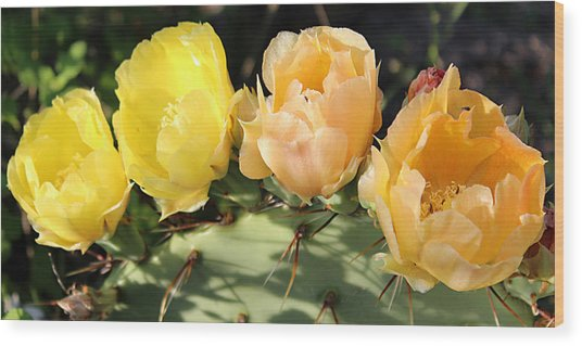 Prickly Pear No. 2 Wood Print