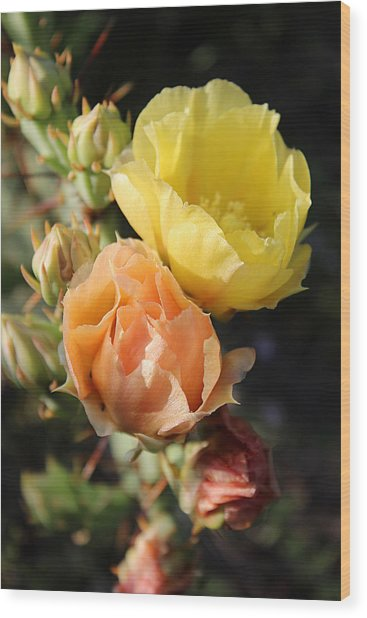 Prickly Pear No. 5 Wood Print