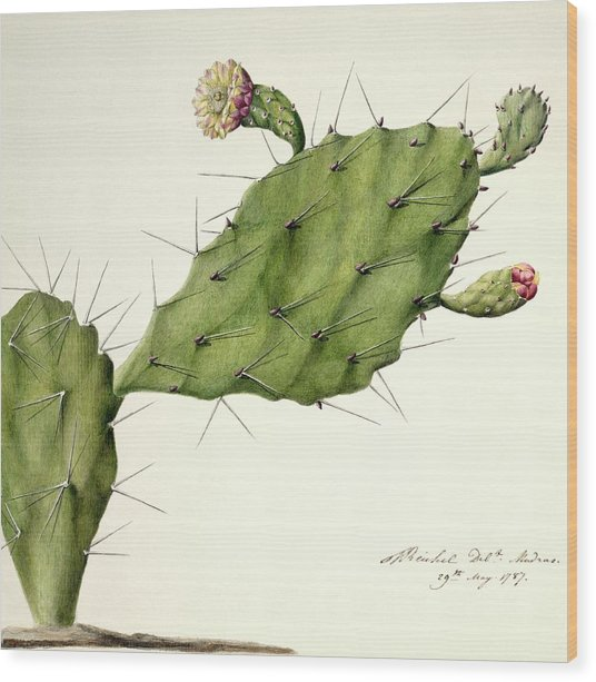 Prickly Pear (opunita Fiscus-indica) Wood Print by Natural History Museum, London/science Photo Library