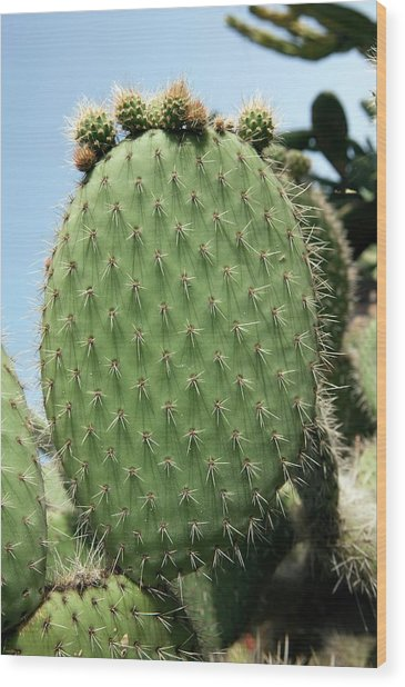 Prickly Pear (opuntia Ficus-indica) Wood Print by Pascal Goetgheluck/science Photo Library