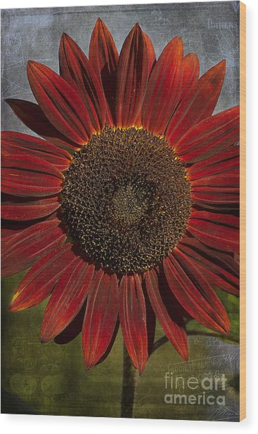 Primitive Sunflower 2 Wood Print