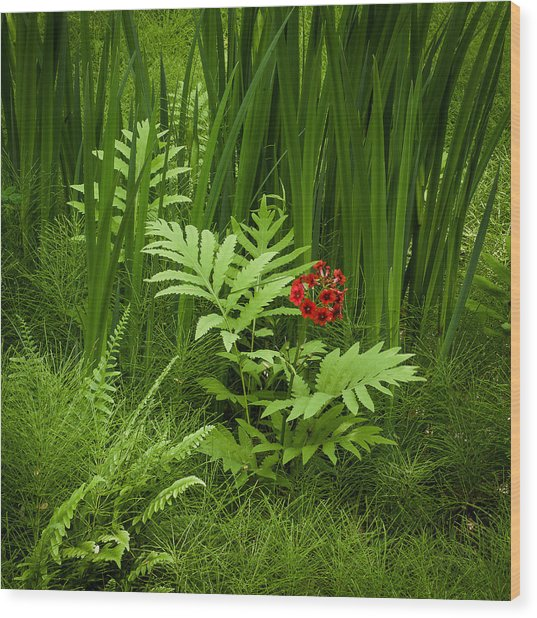 Primrose Amidst Ferns Wood Print