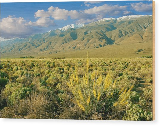 Princes Plume And White Mountains - Owens Valley California Wood Print