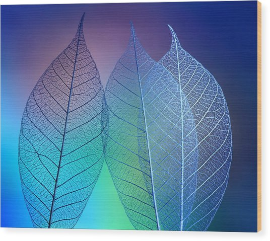 Prismatic Leafs Wood Print