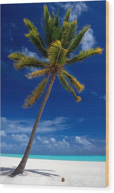 Pristine Tropical Beach  Wood Print
