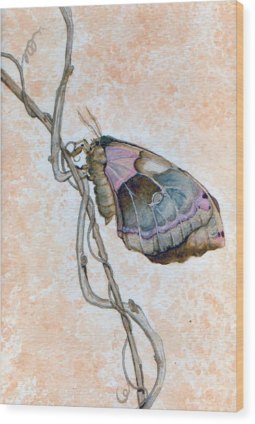 Promethea Moth Wood Print