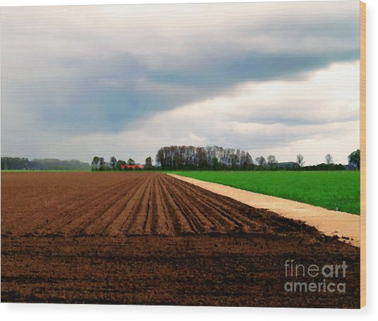 Wood Print featuring the photograph Promissing Field by Luc Van de Steeg