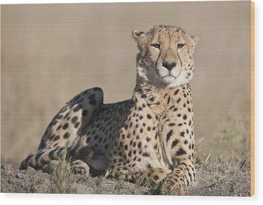 Proud Cheetah Wood Print
