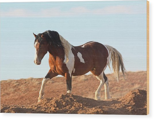 Proud Paint Mustang Wood Print