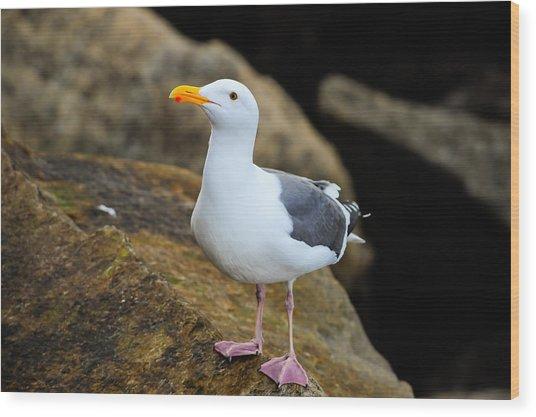 Proud Seagull Wood Print