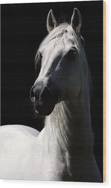 Proud Stallion Wood Print