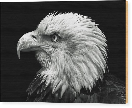 Proud Wood Print