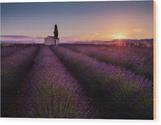 Provence Lavender Wood Print