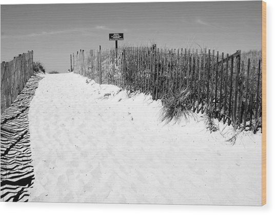 Provincetown Dunes On Cape Cod Wood Print