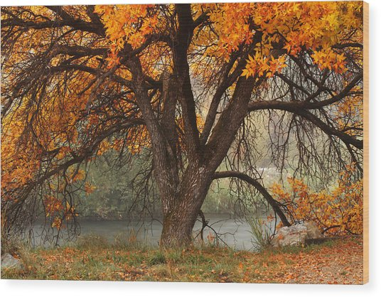 Provo Autumn #1 Wood Print