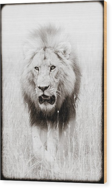 Prowling For Prey Wood Print