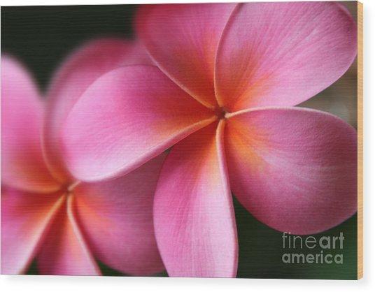 Wood Print featuring the photograph Pua Lei Aloha Cherished Blossom Pink Tropical Plumeria Hina Ma Lai Lena O Hawaii by Sharon Mau