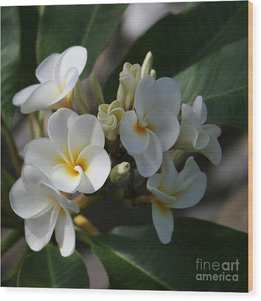 Pua Melia Na Puakea Onaona Tropical Plumeria Wood Print