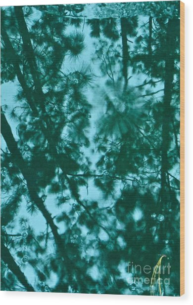 Puddle Of Pines Wood Print