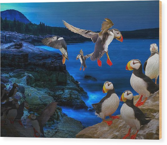 Puffins Bedding Down Wood Print