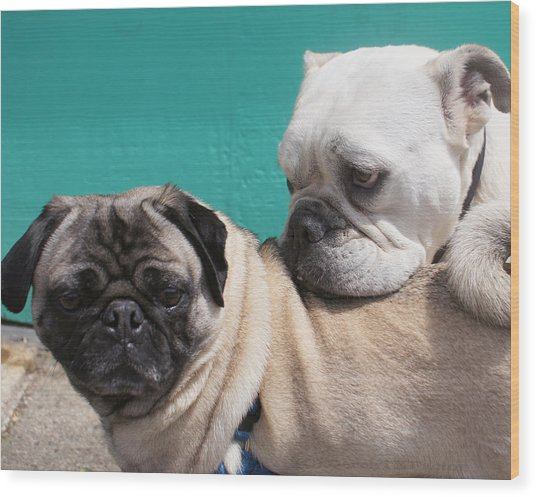 Pug Love Wood Print by DerekTXFactor Creative