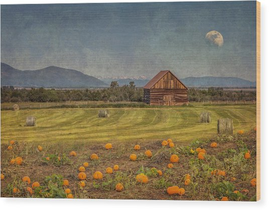 Pumpkin Field Moon Shack Wood Print