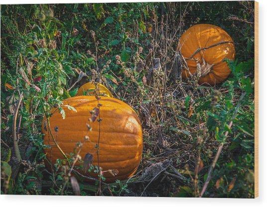Pumpkin Patch Wood Print by Gene Sherrill