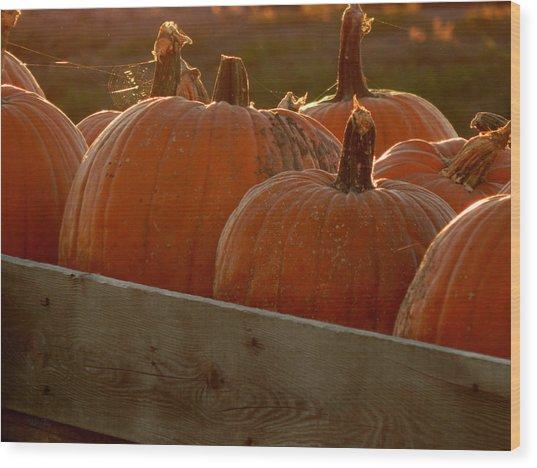 Pumpkin Webbed Light Wood Print