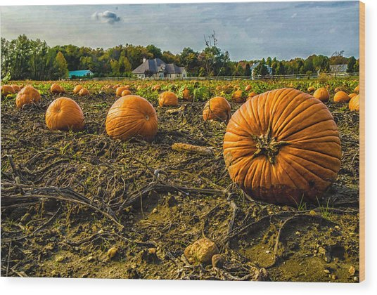 Pumpkins Picking Wood Print by Louis Dallara