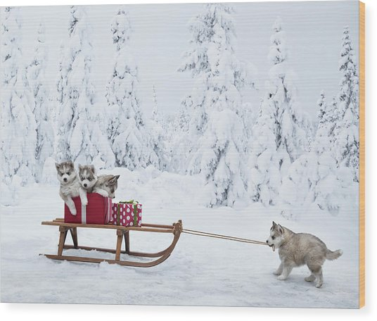 Puppies With A Sled Full Of Christmas Wood Print by Per Breiehagen