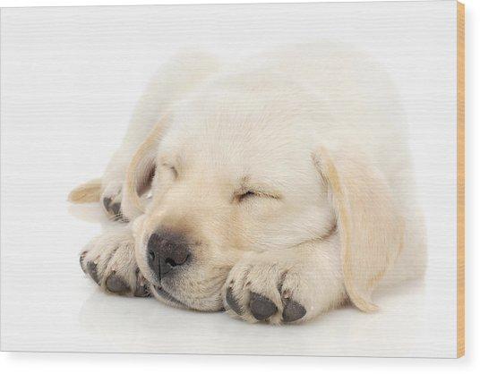 Puppy Sleeping On Paws Wood Print