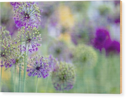 Purple Allium Wood Print