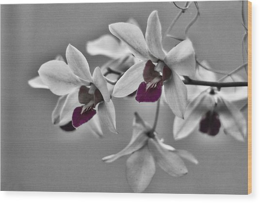 Purple And Pale Green Orchids - Black And White Wood Print