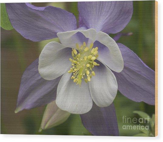 Purple And White Wood Print
