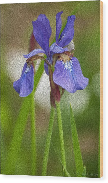 Purple Bearded Iris Oil Wood Print