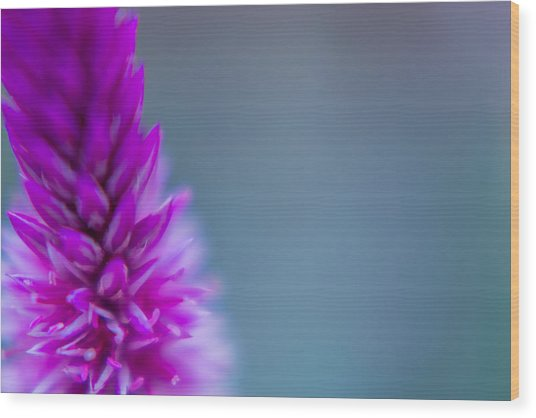Purple Blur Wood Print