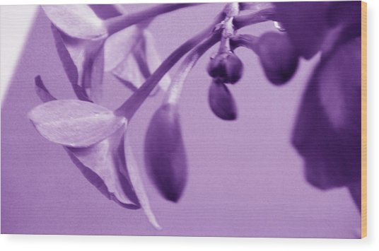 Purple Charm Wood Print